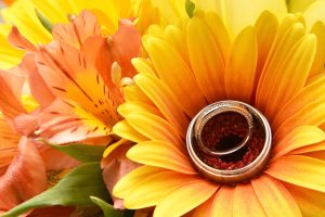 Wedding rings in the center of a beautiful large yellow daisy.
